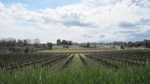 Feld bei Saint Sulpice